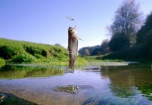 рыба выпригивает из воды